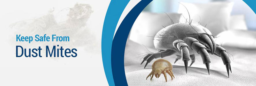 Dust Mites Reduction and Prevention in New Jersey