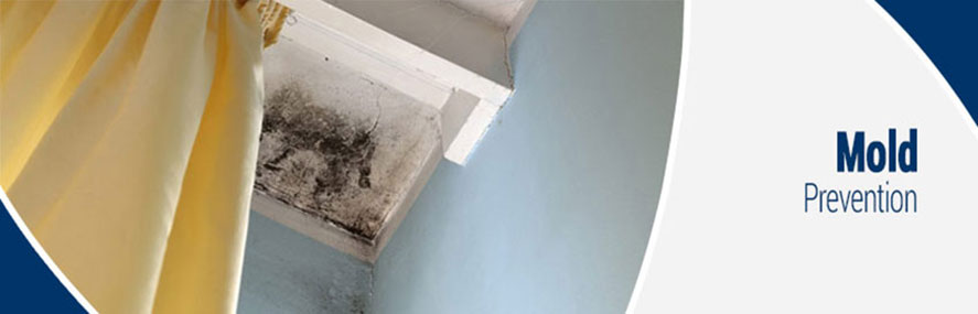 Mold Prevention Strategies in New Jersey